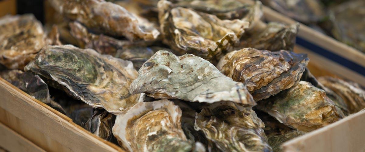 Vente directe d'huîtres